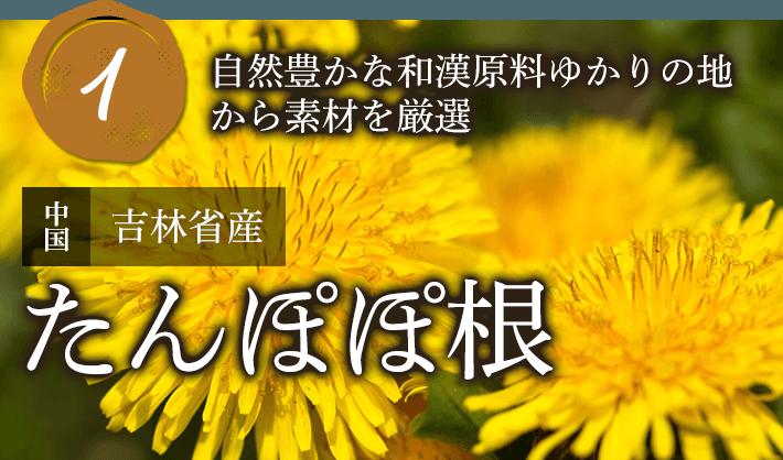 自然豊かな和漢原料ゆかりの地から素材を厳選 たんぽぽ根